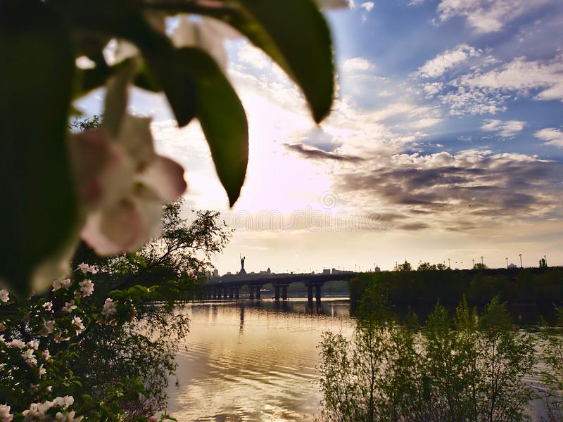 Photo of apple blossom on the background of a wide river Dnipro in Kiev and looking at the opposite bank and the bridge. After the rain royalty free stock image