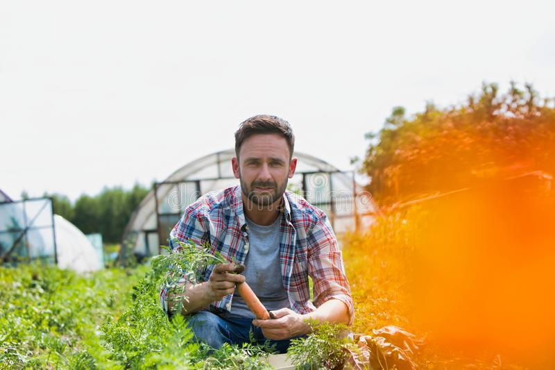 Attractive male farmer harvesting carrots on his organic farm with greenhouse in background. Photo of Attractive male farmer harvesting carrots on his organic stock image