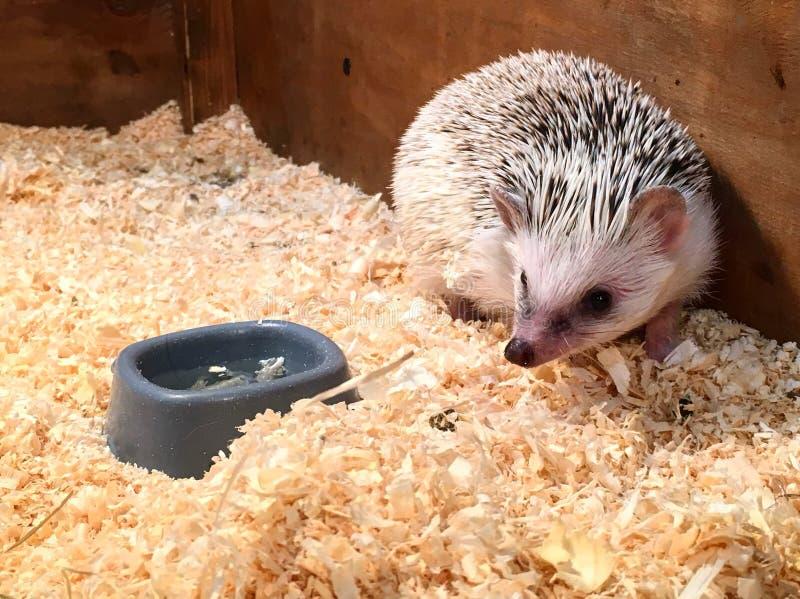 Photo au zoo de contact photos stock