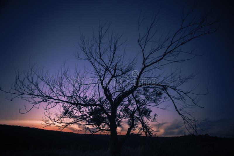 Photo of Autumn Tree during Sunset royalty free stock photo
