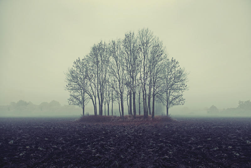 Photo Of Autumn Trees Stock Photos