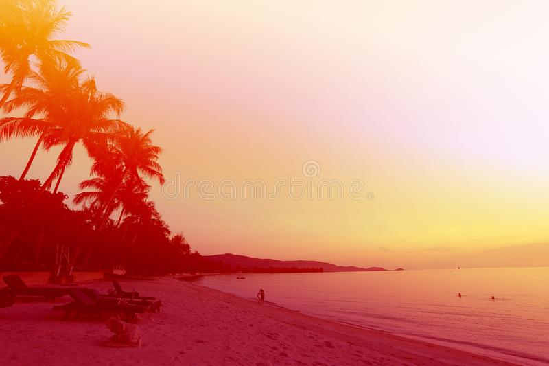 Photo background of exotic beautiful palm trees royalty free stock images