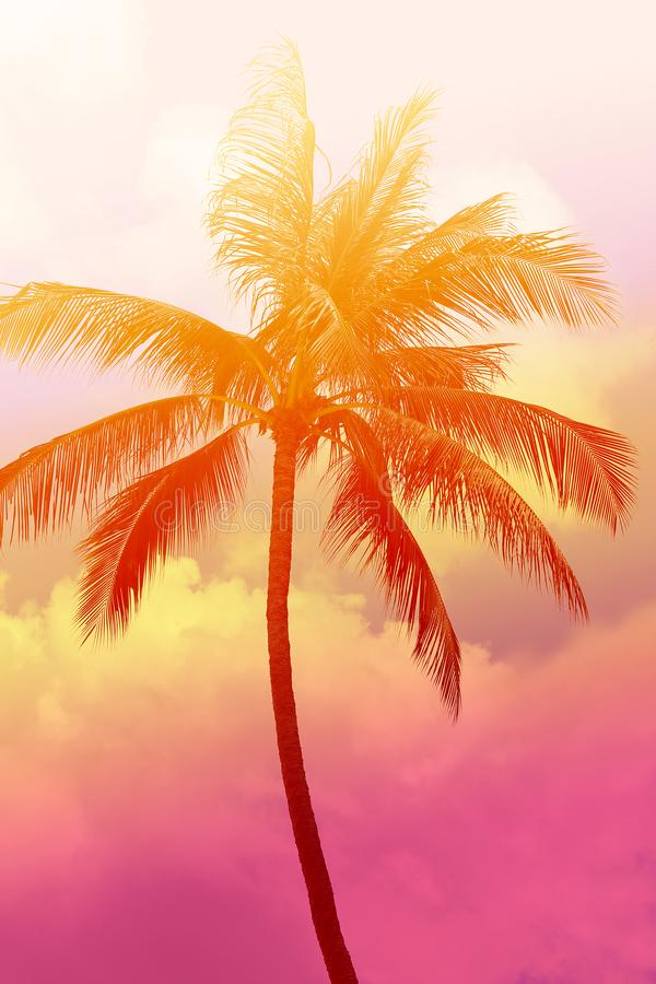 Photo background of exotic beautiful palm trees stock images