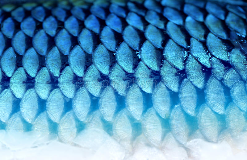 Photo background fragment of fish scales stock photography