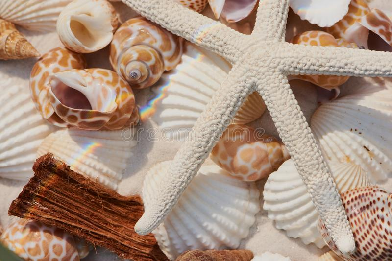 Starfish and shell on fine sand background royalty free stock photography