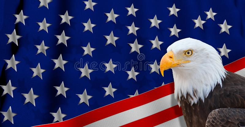 Photo of a bald eagle profile view on a 3D illustration of white stars on a blue background royalty free stock image