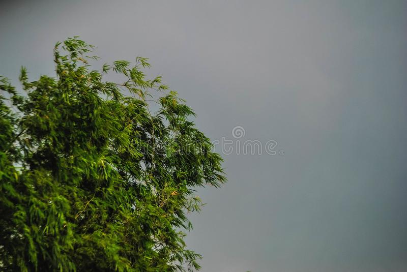 Photo of a bamboo tree. Photo of a bamboo tree, that can be used for summer backgrounds and more stock photography
