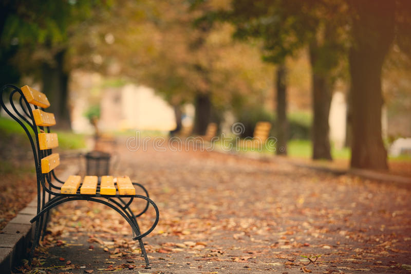 Photo of beautiful autumn park full of benches and folliage in w stock image