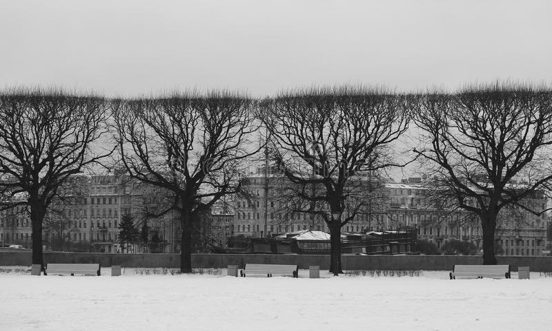Photo beautiful black trees in winter in the city royalty free stock photography