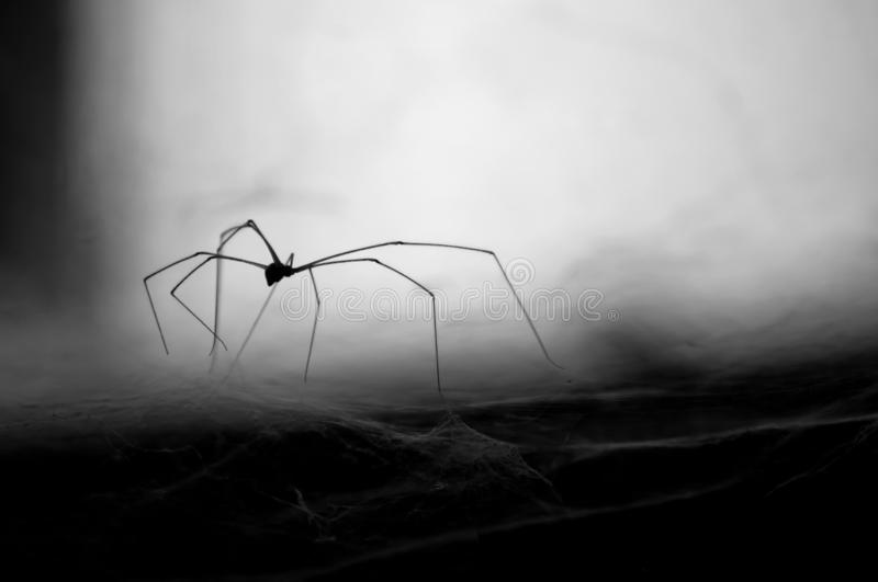 Beautiful black and white spider on the web stock image
