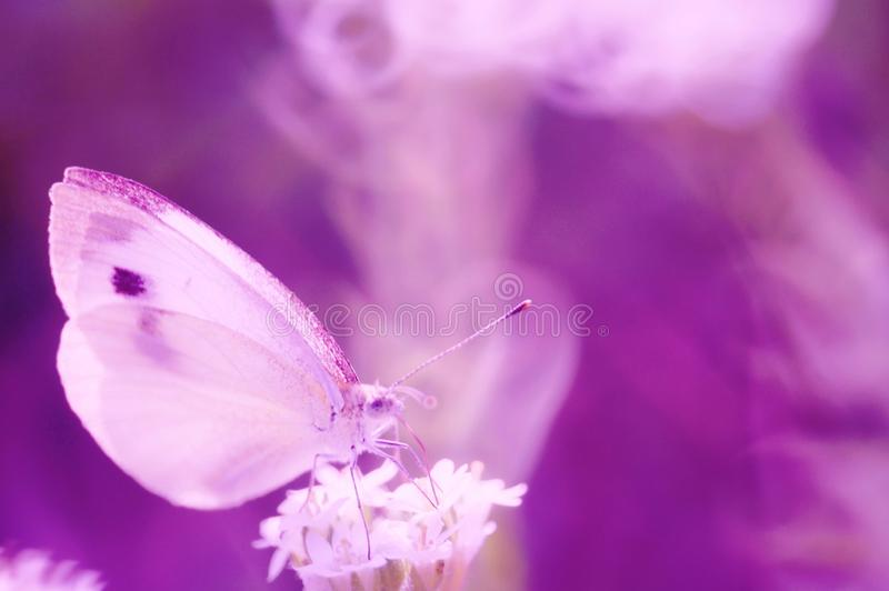 Photo of a beautiful butterfly in nature. stock photography