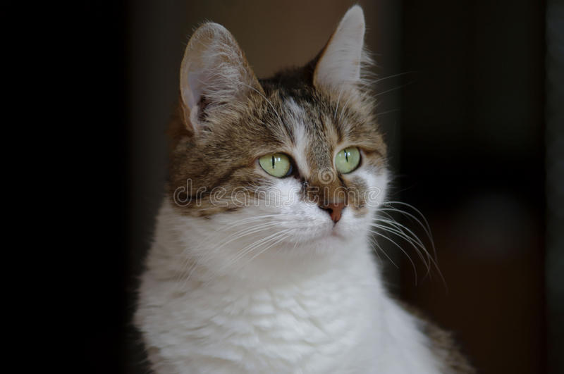 Photo of a beautiful cat, cat photo royalty free stock photography