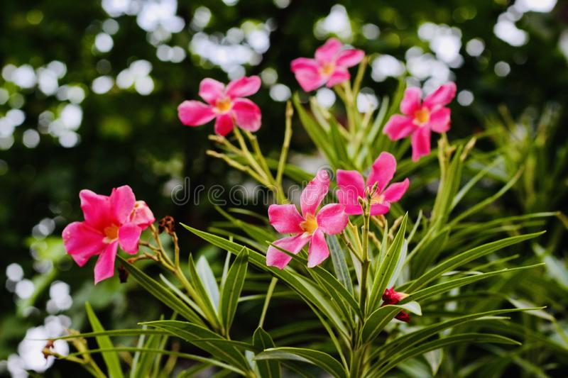Beautiful Pink flowers in the valley stock photo