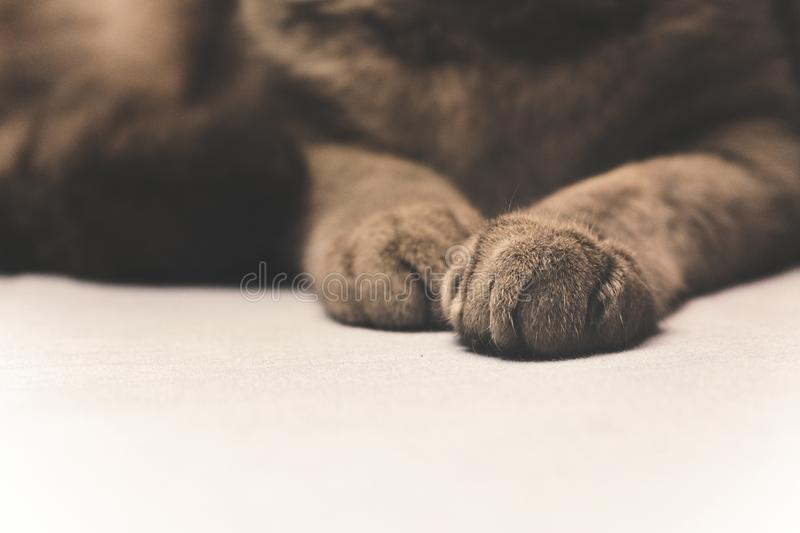 Photo Of Black And Brown Cat Paw Picture. Image: 109920170