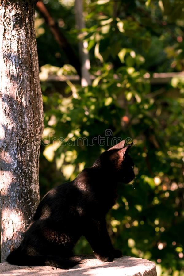 Photo of a black cat in spring in the park. Picture of a black cat on the garden in the summer, beautiful photo of a pet royalty free stock photography