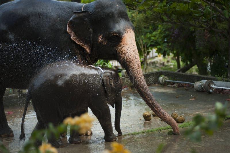 Photo of Black Elephant With Baby royalty free stock photo