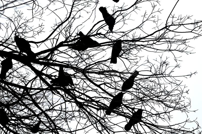 Photo of black silhouettes of flying birds royalty free stock photography