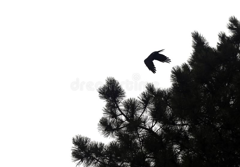 Photo of black silhouettes of flying birds stock photo