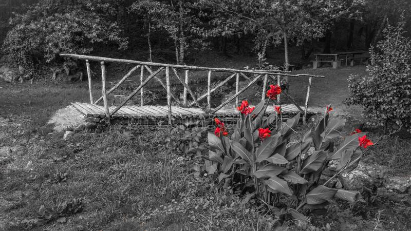 Photo of a black and white wooden bridge, with red flowers stock image
