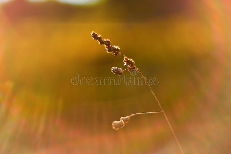 Photo of blurred field. Out of focus Summer Autumn sunset. stock photo