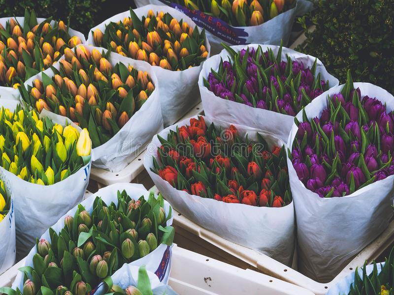 Photo of Bouquet of Tulips stock photo