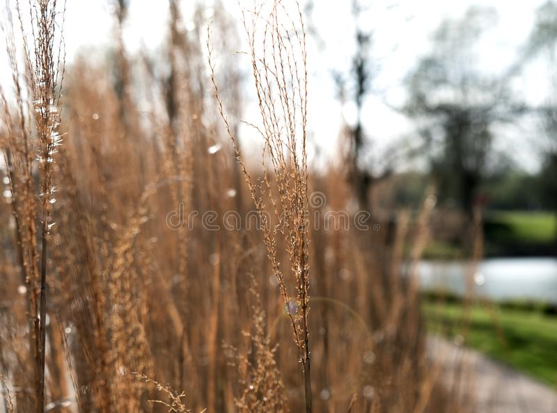 Photo of Brown Grass Field royalty free stock photo
