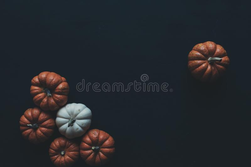 Photo of Brown and White Pumpkins royalty free stock photo
