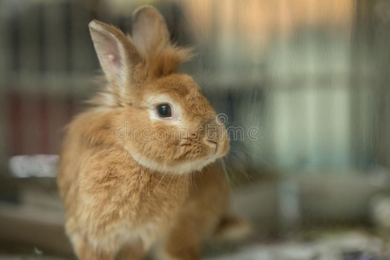 Photo of a bunny rabbit behind glass stock photography