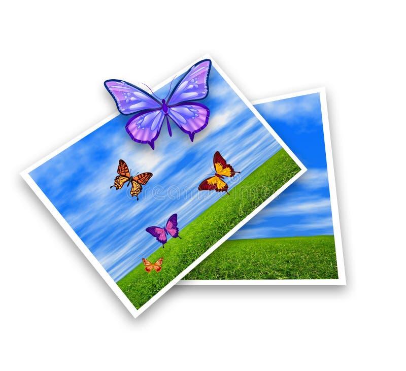 Photo butterflies illustration stock photography