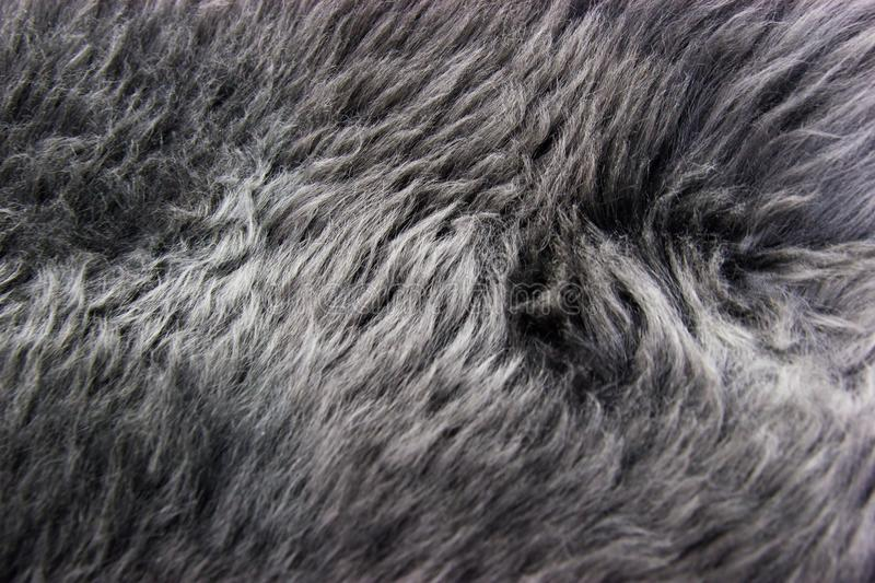 Grey fur. The photo can be used as a background for advertising. It is sheepskin which symbolizes warmth, comfort and carelessness royalty free stock image