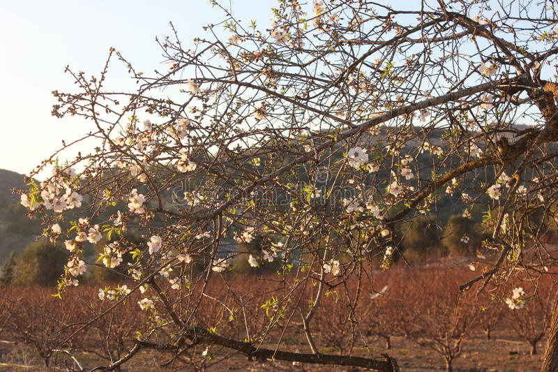 Photo captured in 3.2.2017 in a sunny day near fureidis village stock image