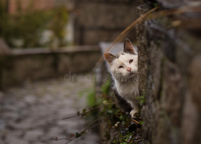Photo of a Cat Looking Behind the Tree royalty free stock photos