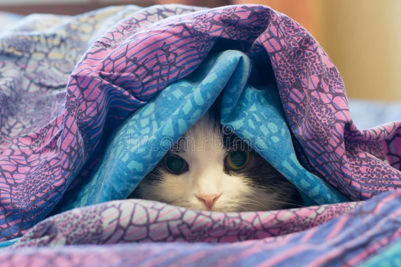 Photo of a cat wrapped in a blanket stock images