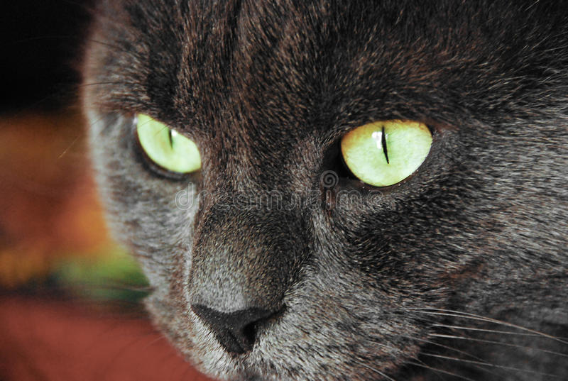 Download Photo Of Cat Yellow-gray Eyes Stock Photo - Image: 27673714