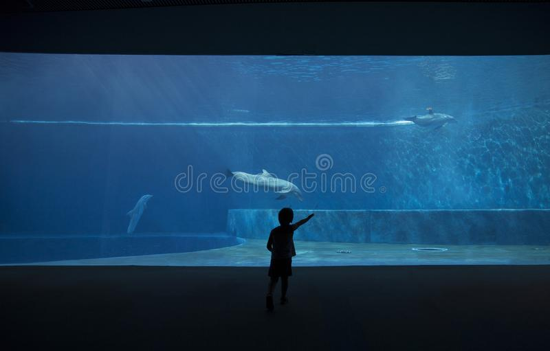 Photo of a child watching the dolphins stock image