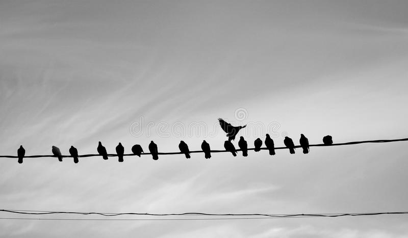 Photo of a close-up of many silhouettes of birds stock photography