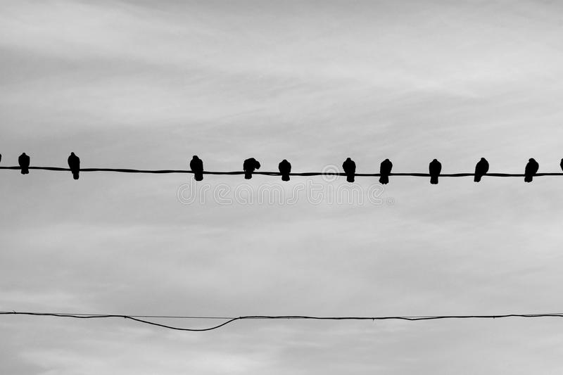 Photo of a close-up of many silhouettes of birds royalty free stock images