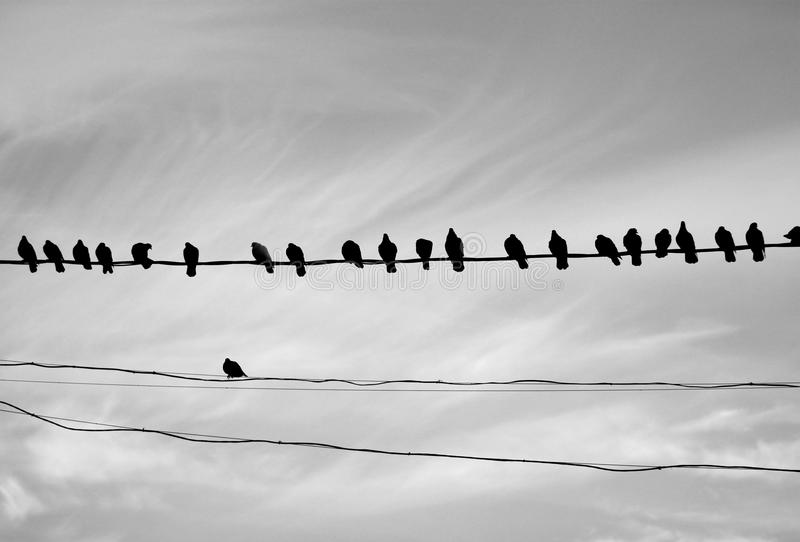 Photo of a close-up of many silhouettes of birds stock image