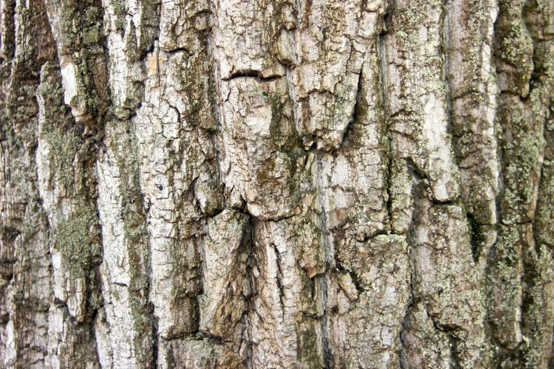 The photo of  close-up wood bark. Background for timber industry. The photo of  close-up wood bark of pine. Background for timber industry stock images