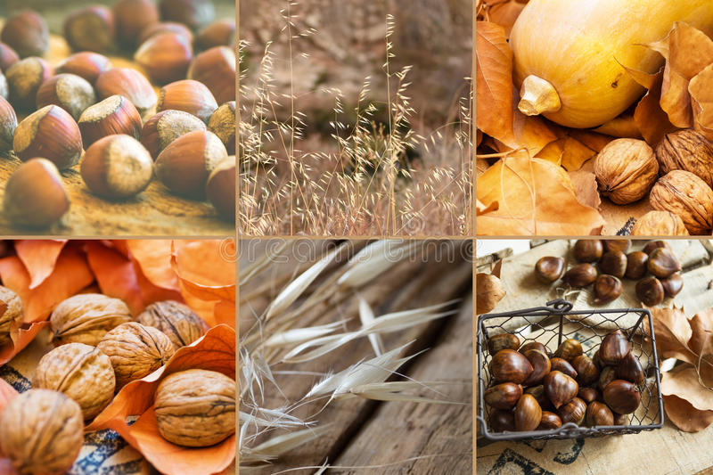 Photo collage six square images autumn, fall, hazelnuts, walnuts, dry colorful leaves, chestnuts in wicker basket, pumpkin royalty free stock photography