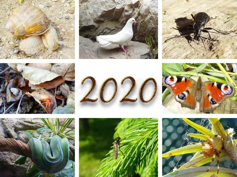 Photo collage with white dove, insect, snail and snake for year 2020. Photo collage with white dove, peacock butterfly, Four-spot-orb-weaver Araneus quadratus royalty free stock photography