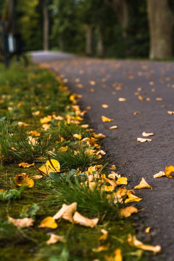 Photo colorée de la route en parc, entre les bois - vue de plan rapproché des feuilles avec le fond brouillé avec l'espace pour l photo stock