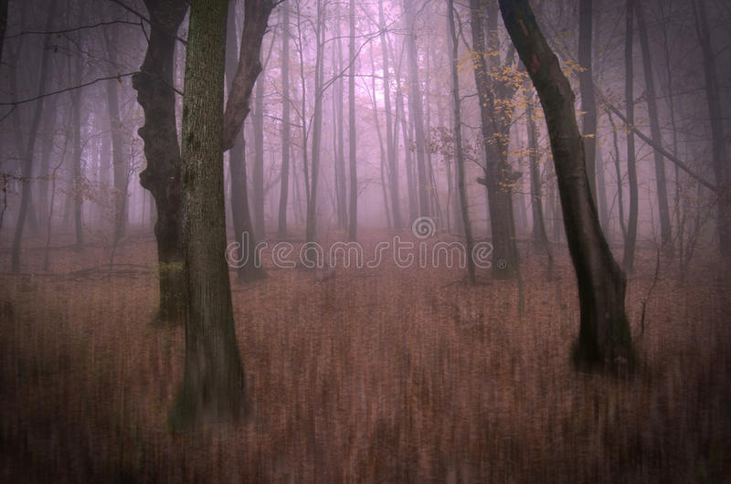 Photo conceptuelle du chemin forestier rêveur fantastique couvert de brume photos stock