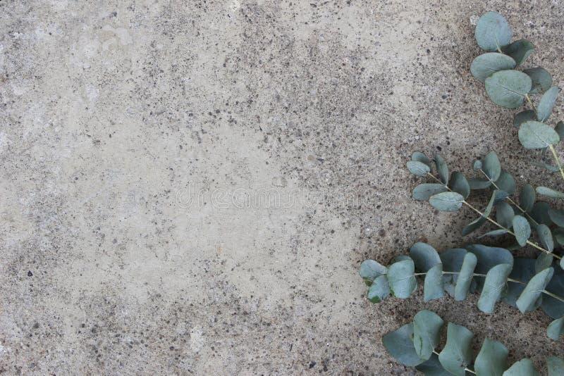 Photo courante dénommée féminine La composition florale de l'eucalyptus vert de dollar en argent part et s'embranche Béton grunge photographie stock libre de droits