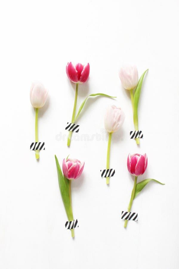 Photo courante dénommée Pâques féminine, composition en ressort avec les tulipes roses attachées du ruban adhésif sur le fond bla image stock