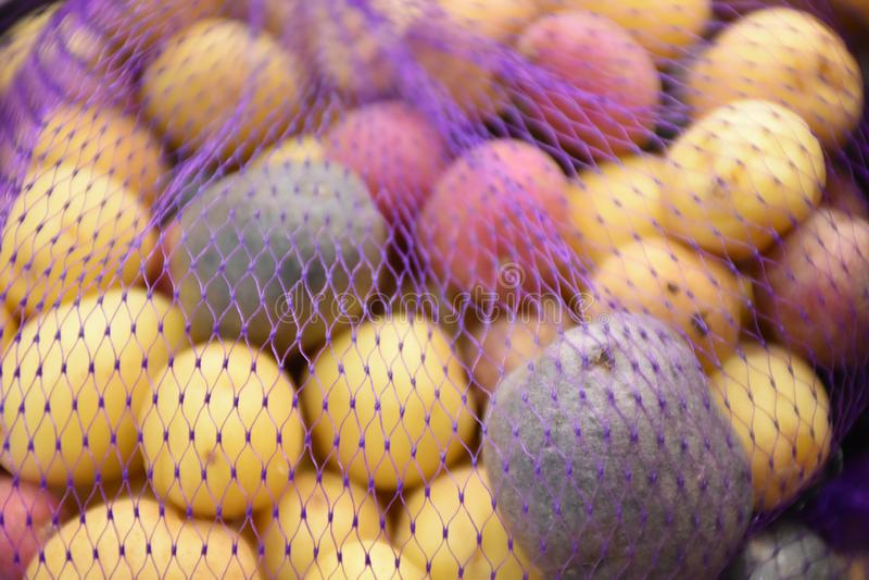 Photo courante de potatoe d'arc-en-ciel photo stock