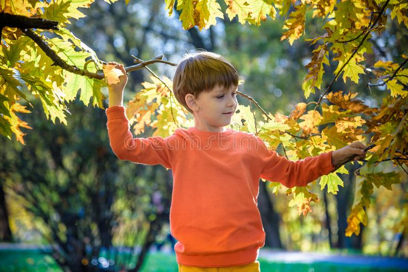 Photo of cute little boy enjoying autumnal nature, pretty infant playing in park, cheerful baby boy having fun outdoors, adorable stock photography