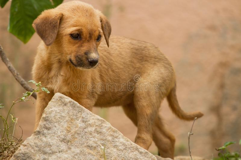 A cute little feral puppy royalty free stock photography