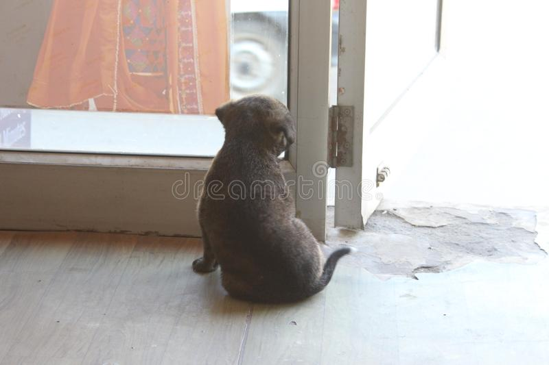 Cute street puppy looking outside stock photos