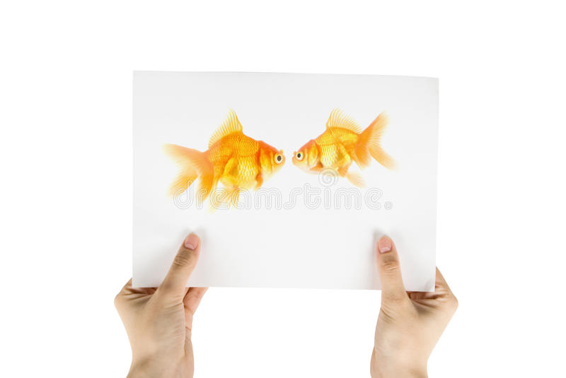 photo d'or de poissons image libre de droits